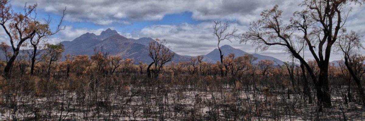bushfire-4772185_1920-1024x566