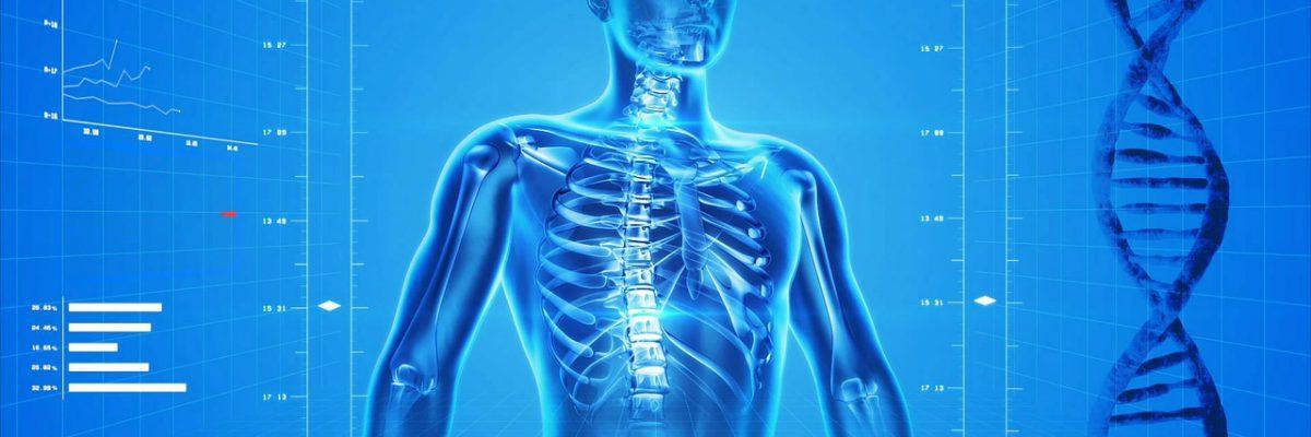 human-skeleton-163715_1280-opqwyl6mxb0ad8uq5lpvnld0x4cs8dxyykyackldi8