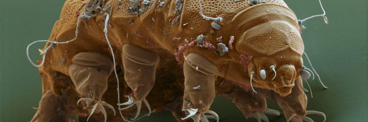 tardigrade-e1443382010464